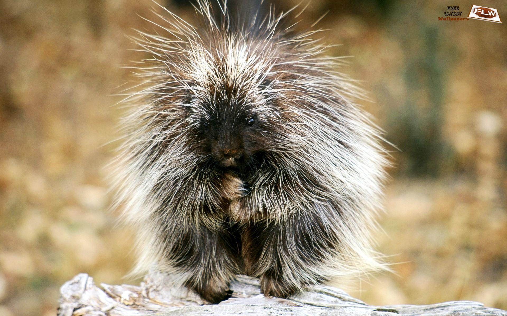 http://khanehsher.persiangig.com/image/animalss/%E2%99%A519.jpg