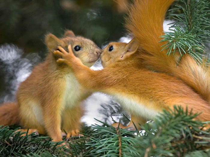 http://khanehsher.persiangig.com/image/animalss/%E2%99%A520.jpg
