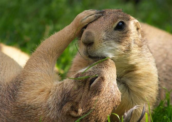 http://khanehsher.persiangig.com/image/animalss/%E2%99%A521.jpg