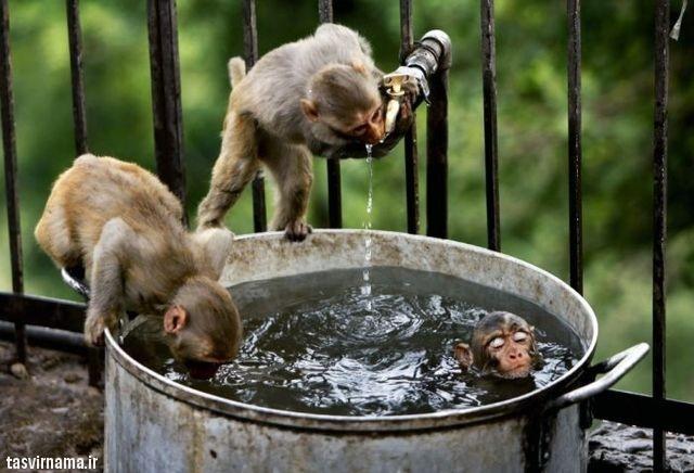 http://khanehsher.persiangig.com/image/animalss/%E2%99%A524.jpg
